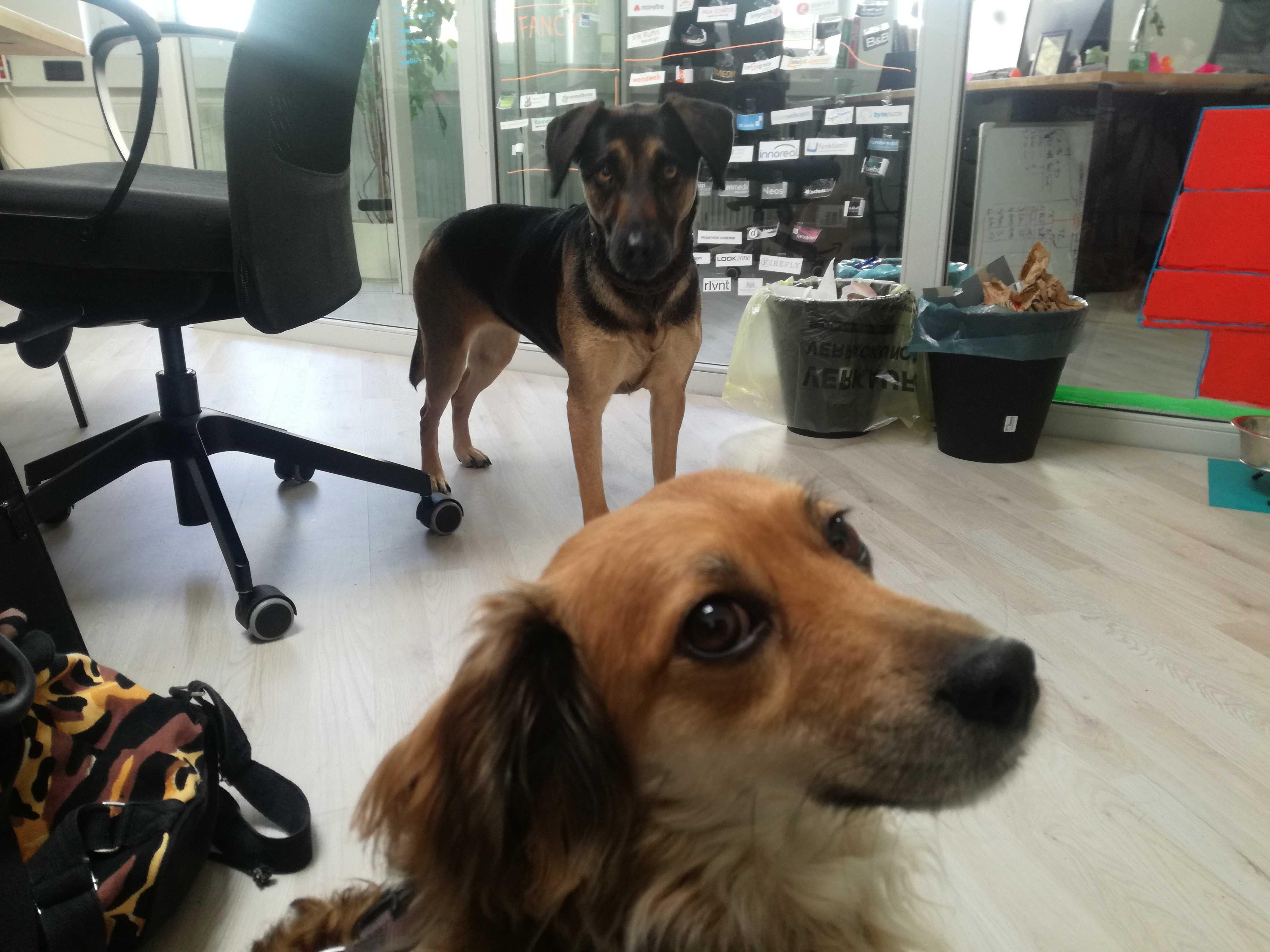 Unsere Bürohunde Fox und Charlie